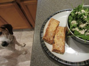 Coonhounds will eat tofu.