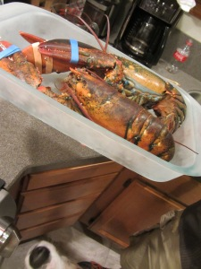 Numbed lobsters, ready to go in the pot to steam.