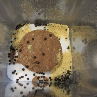 Kosher salt, brown sugar, black peppercorns, and dry mustard.