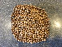 Cumin seed, cardamom, and coriander seed.