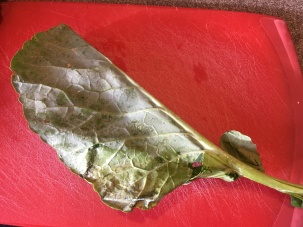A collard green leaf, folded in half along the stem.